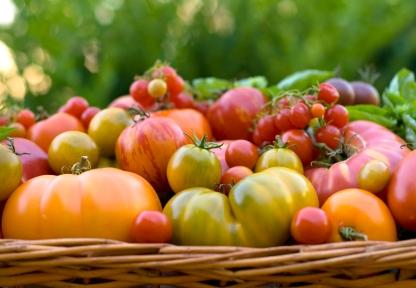 Understanding Organic Gardening